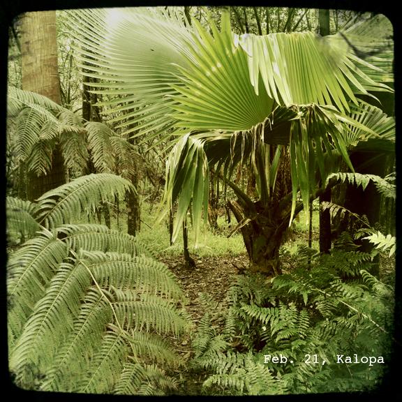 kalopa_hawaii