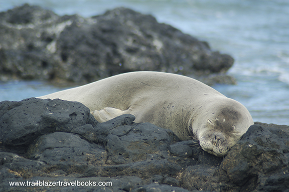 monk_seal_hawaii