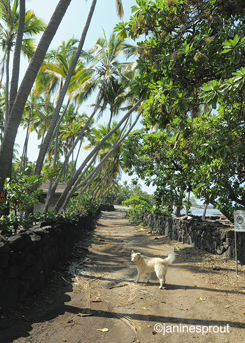 villagelifeHawaii