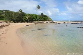 95b61-papa2527a_beach_kauai_hi