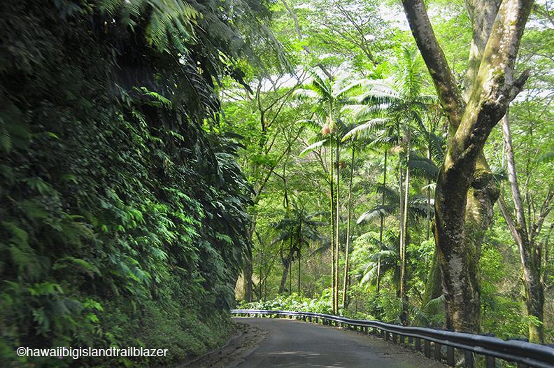 Used Cars Oahu >> The Big Island's Hamakua is like Maui's Hana Highway ...