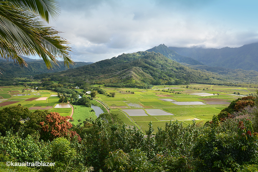 all the islands have lush pockets but kauaithe farthest north and by far the oldestis entirely a green landscape with jungled ridges cleaved by streams - The Garden Island