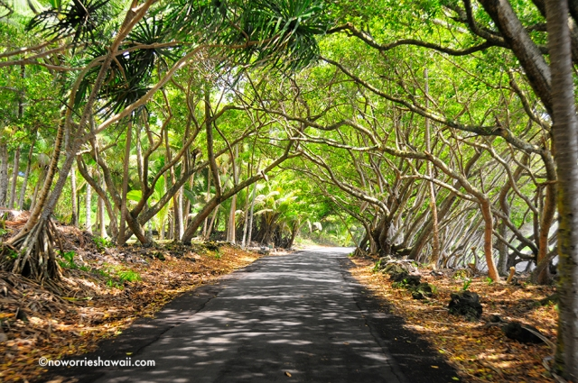 Puna Hawaii Big Island Trailblazer sightsee driving