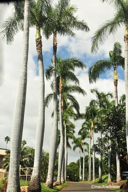 coco palm drive Lahaina school