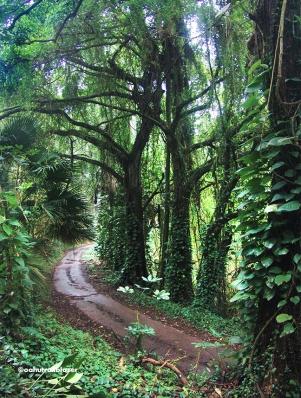 Oahu Trailblazer hiking trails