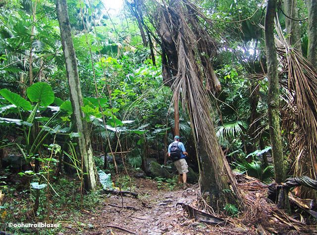 Maunawili Falls Oahu Trailblazer Kailua adventure travel