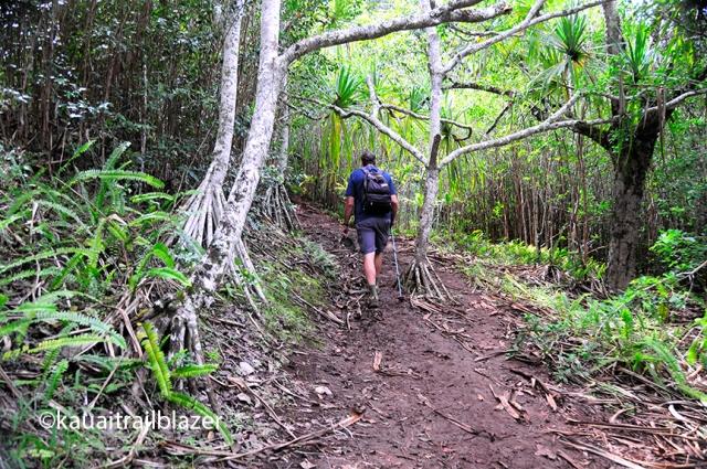 jungle hike kauai hawaiioutside