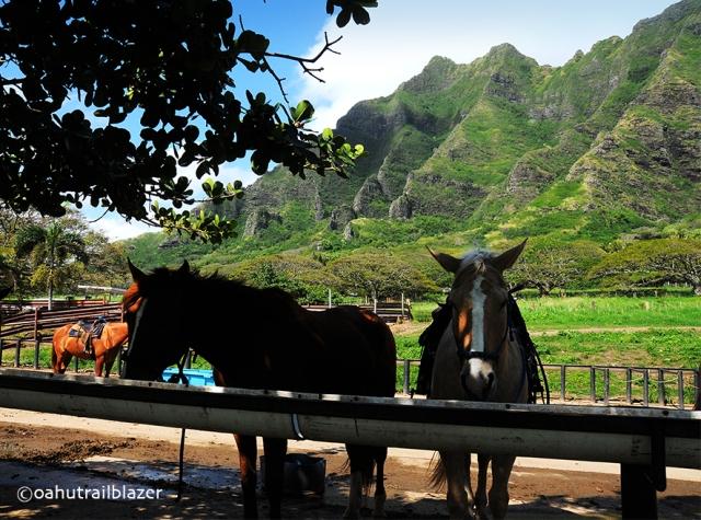 horse rides oahu windward oahu hawaii